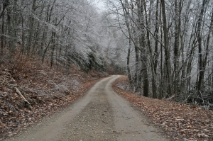 A gravel road with ice-covered trees near Highlands, NC, December 2012 (Photograph: Ross Peters)